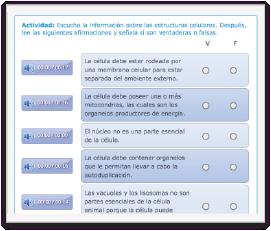 pantallas_7_actividades