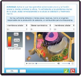 pantallas_8_actividades